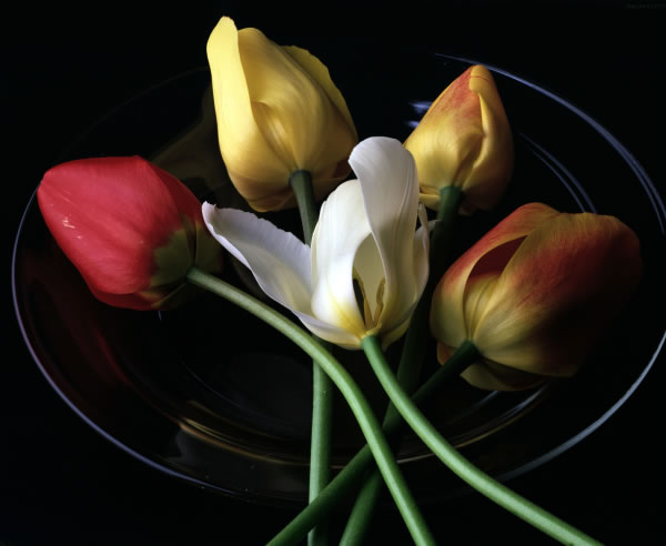 Tulips on a Plate - Copyright Professional Kitchen. All rights reserved.